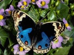 papillon21-538.jpg